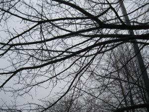 naked black limbs, inked into art, silencing moans of winters blues