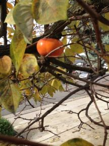 2nd persimmon
